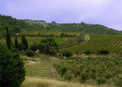 Les vignes au coeur du massif de la Clape